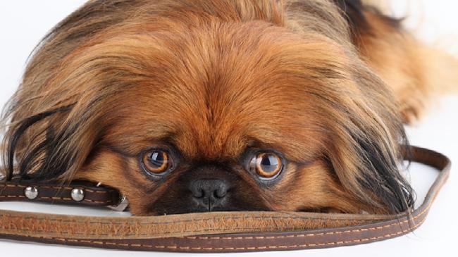 toilettage la garde petit chien
