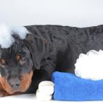 toilettage la garde grand chien