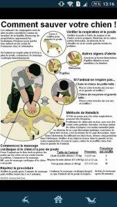 geste de 1er secours pour chien